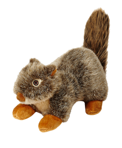 nutsquirrel